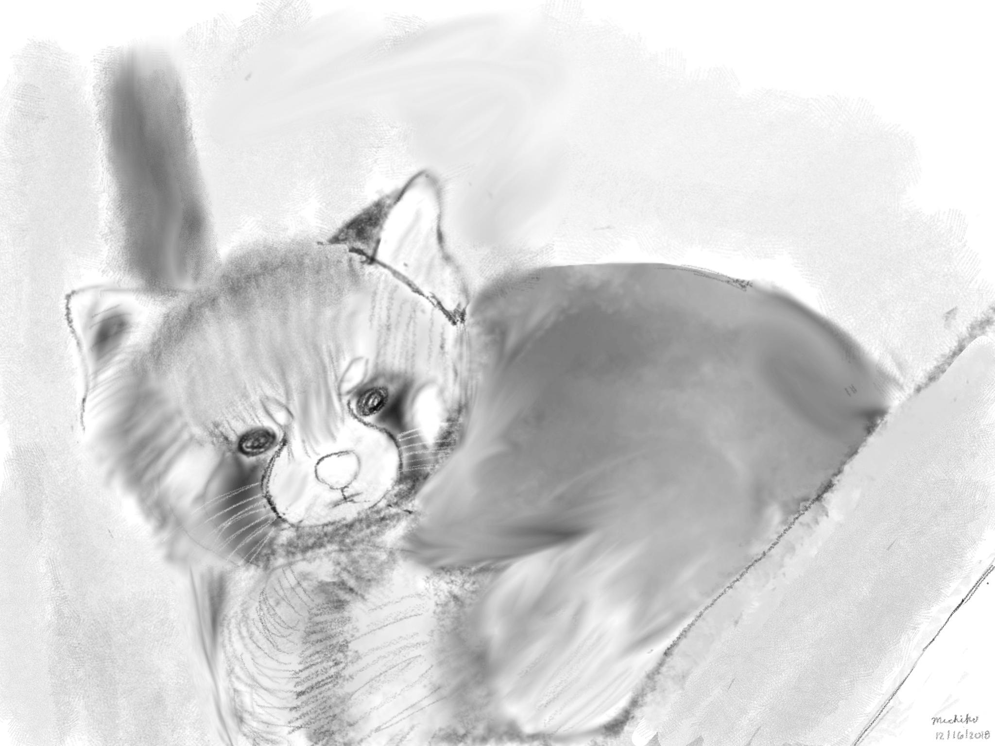 Sketch of red panda